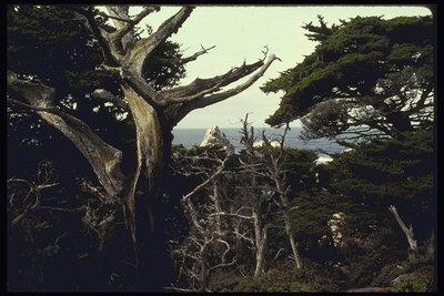 Калифорнийские парки